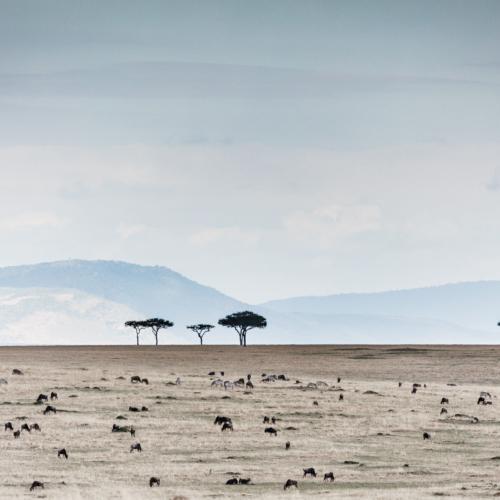 Wildebeest and Zebras, Serengeti, Tanzania