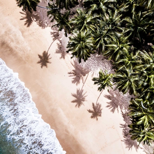 Palm trees, beach and ocean, Principe Island
