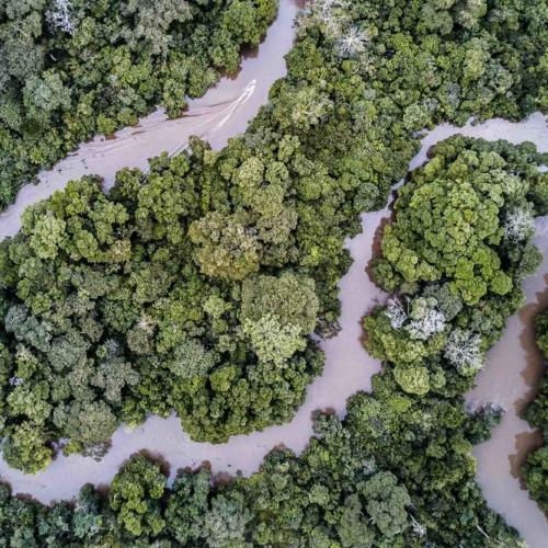 Lekoli River, Odzala-Kokoua National Park, Republic of Congo