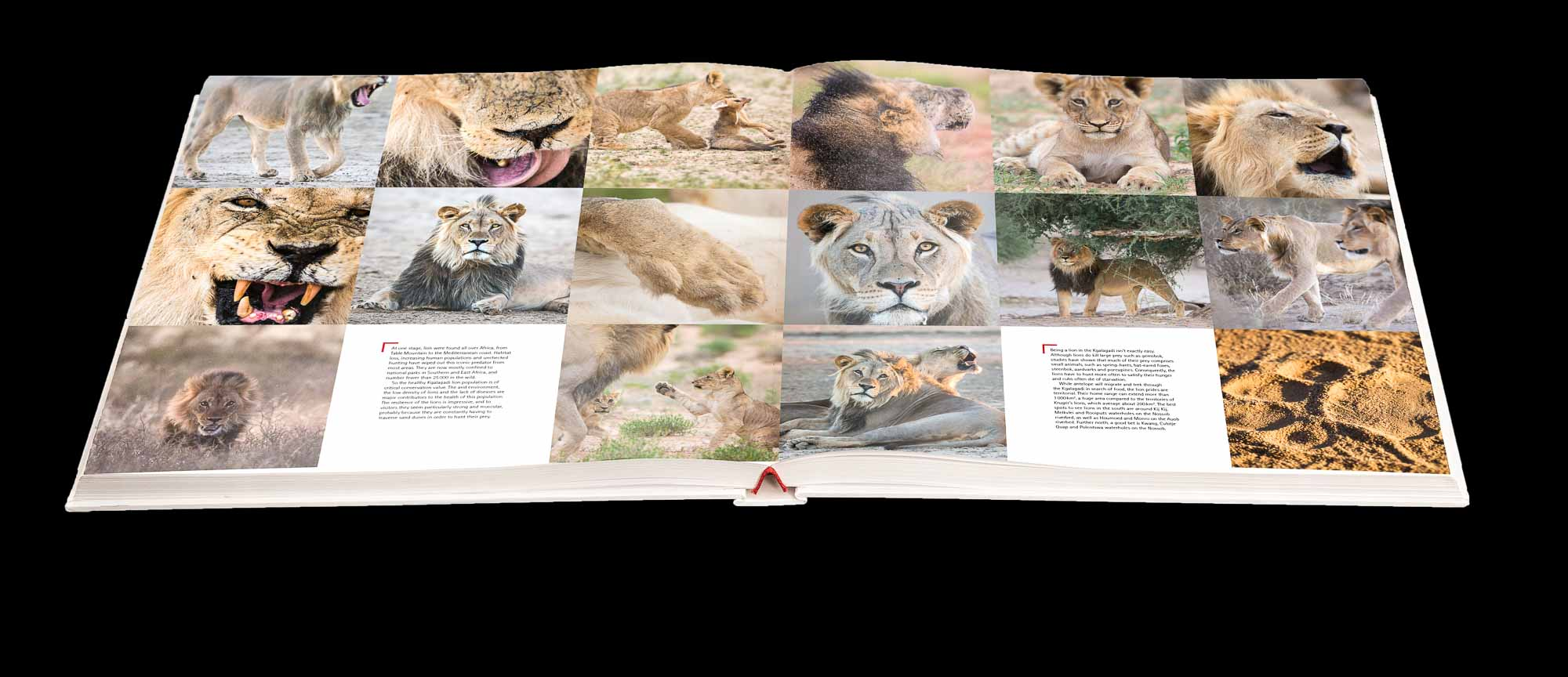 South Africas Wildest Places Book