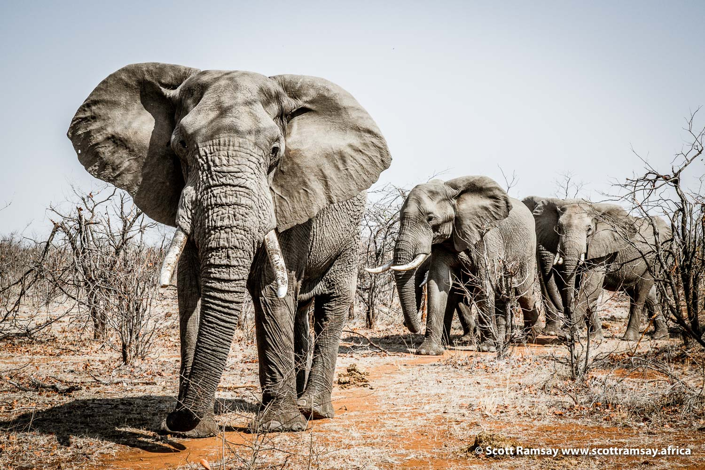 Elephants Gonarezhou National Park in Zimbabwe