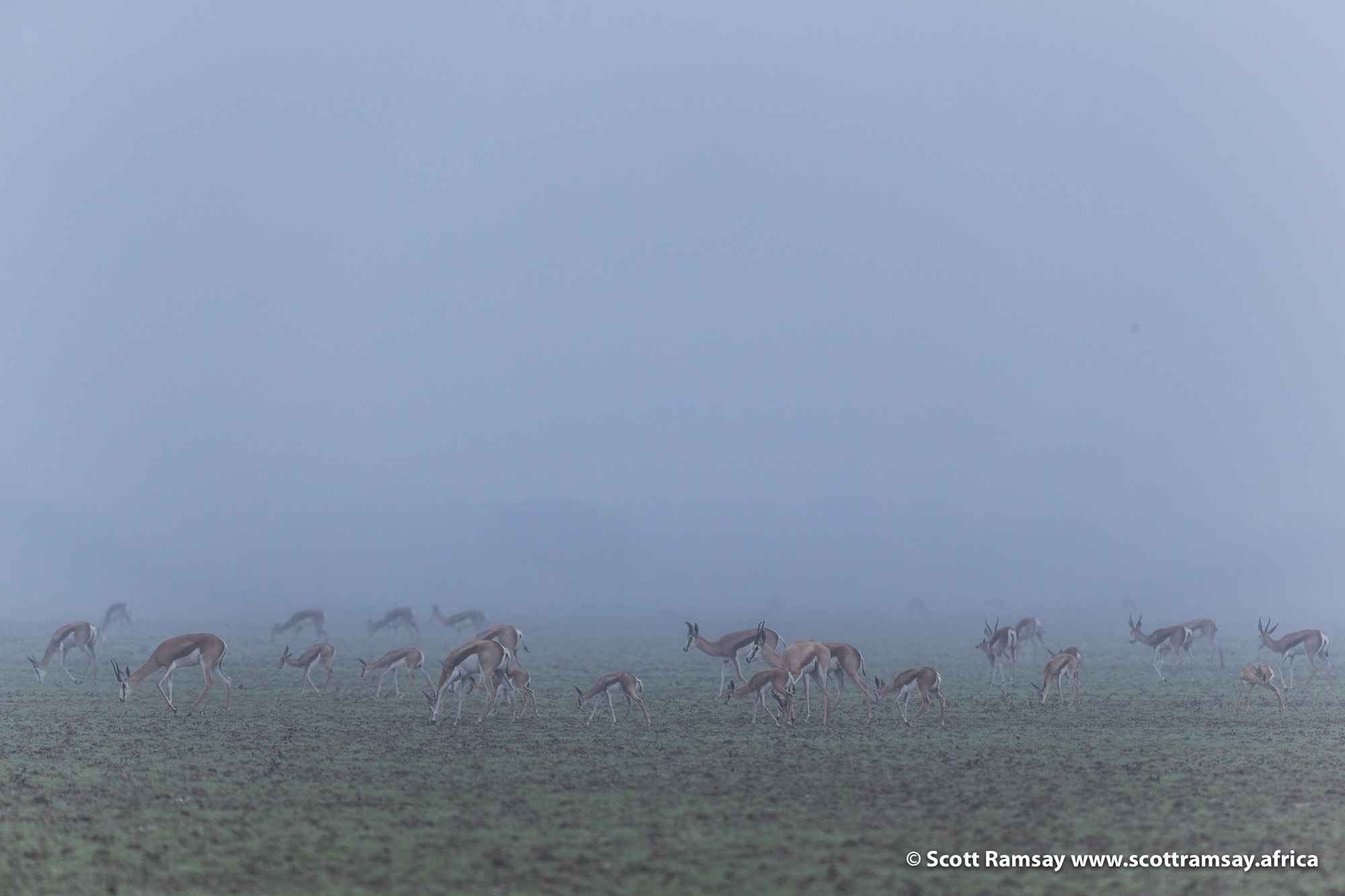 On our first morning camping near Deception Pan, we woke up to remarkable conditions...a low mist that had settled over the Kalahari. Unusual conditions for the middle of summer...for any time of year! We watched a herd of springbok grazing nearby to our campsite.