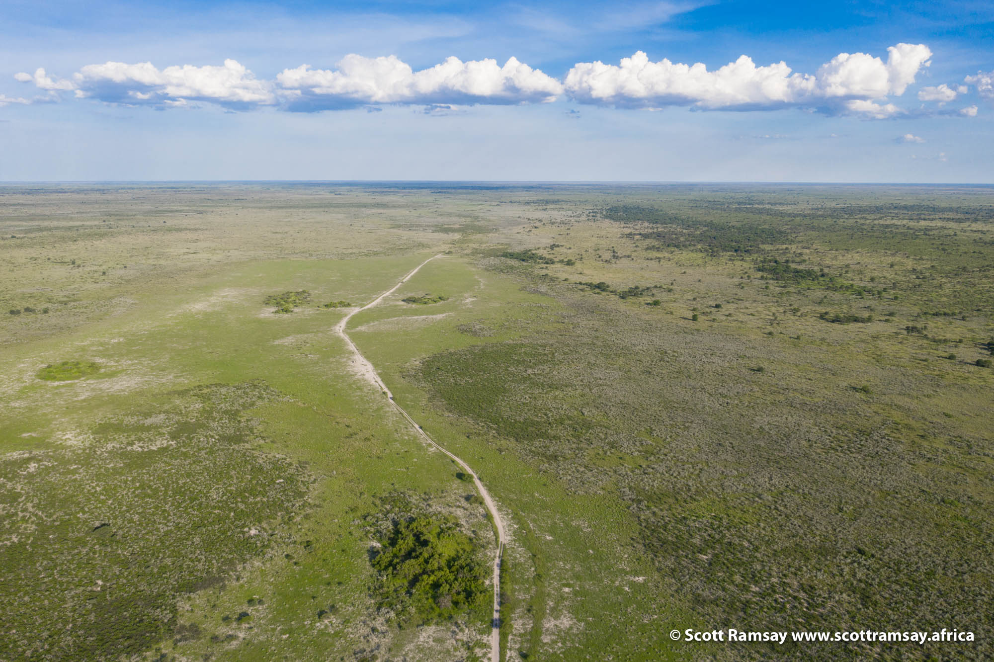 And yet only 20-odd kilometres west, near Letiahau Pan, there had been far more rain, and the landscape has responded with a green blanket of grass.