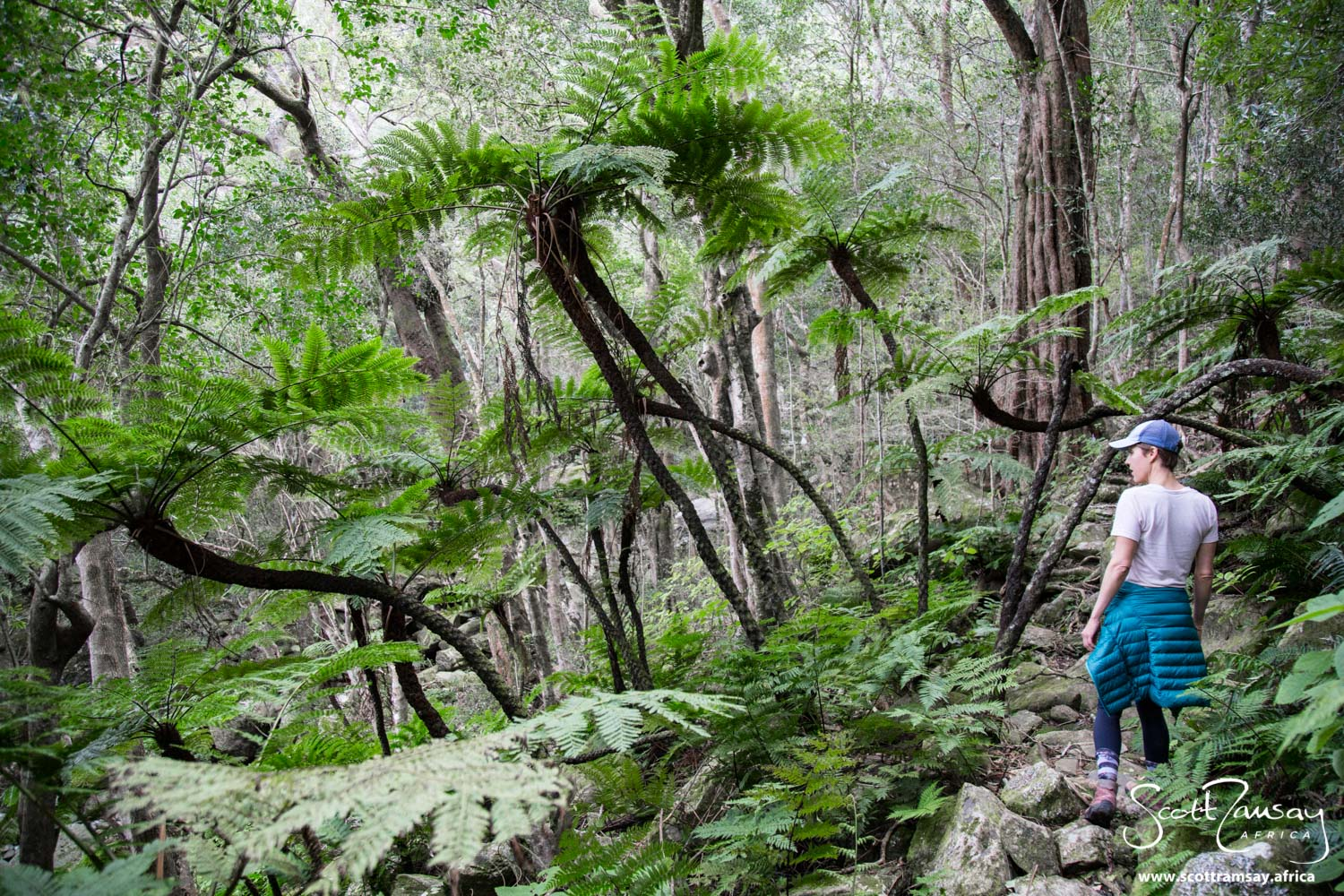 The indigenous forests of Marloth make for great day walks. The forests are relatively easy to get to from the main gate a few kms north of Swellendam