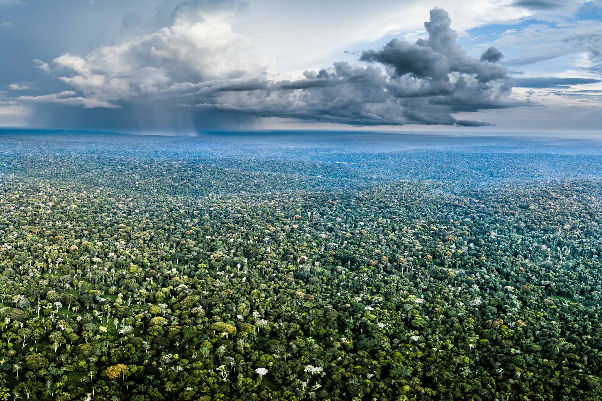 The remarkable Odzala-Kokoua National Park in Republic of Congo, one of many protected areas which Paul Telfer has helped establish or promote.