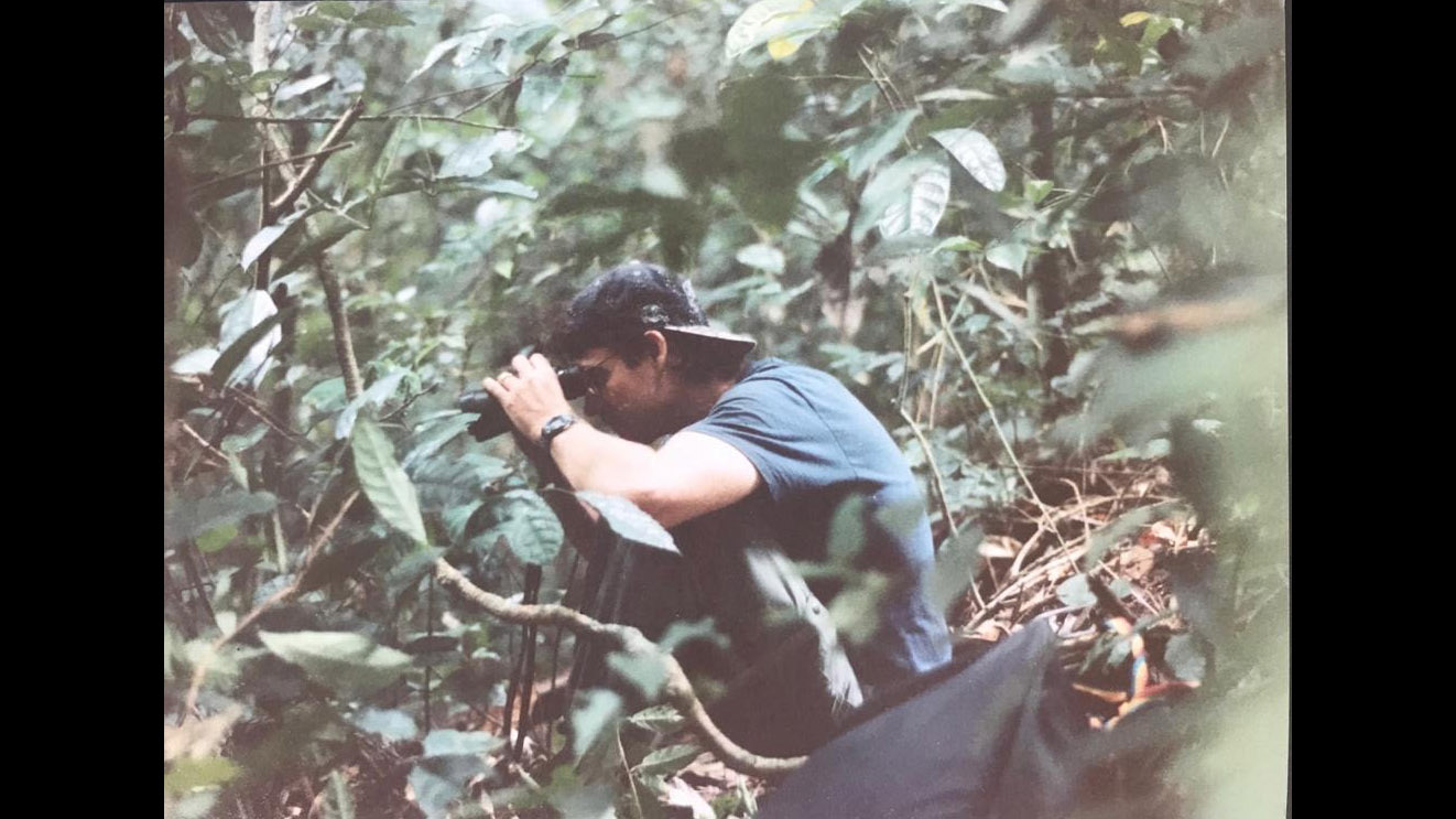 A younger Paul Telfer watching a group of lowland gorillas for the first time, in Gabon in 1994, a life-changing moment for the researcher from California.