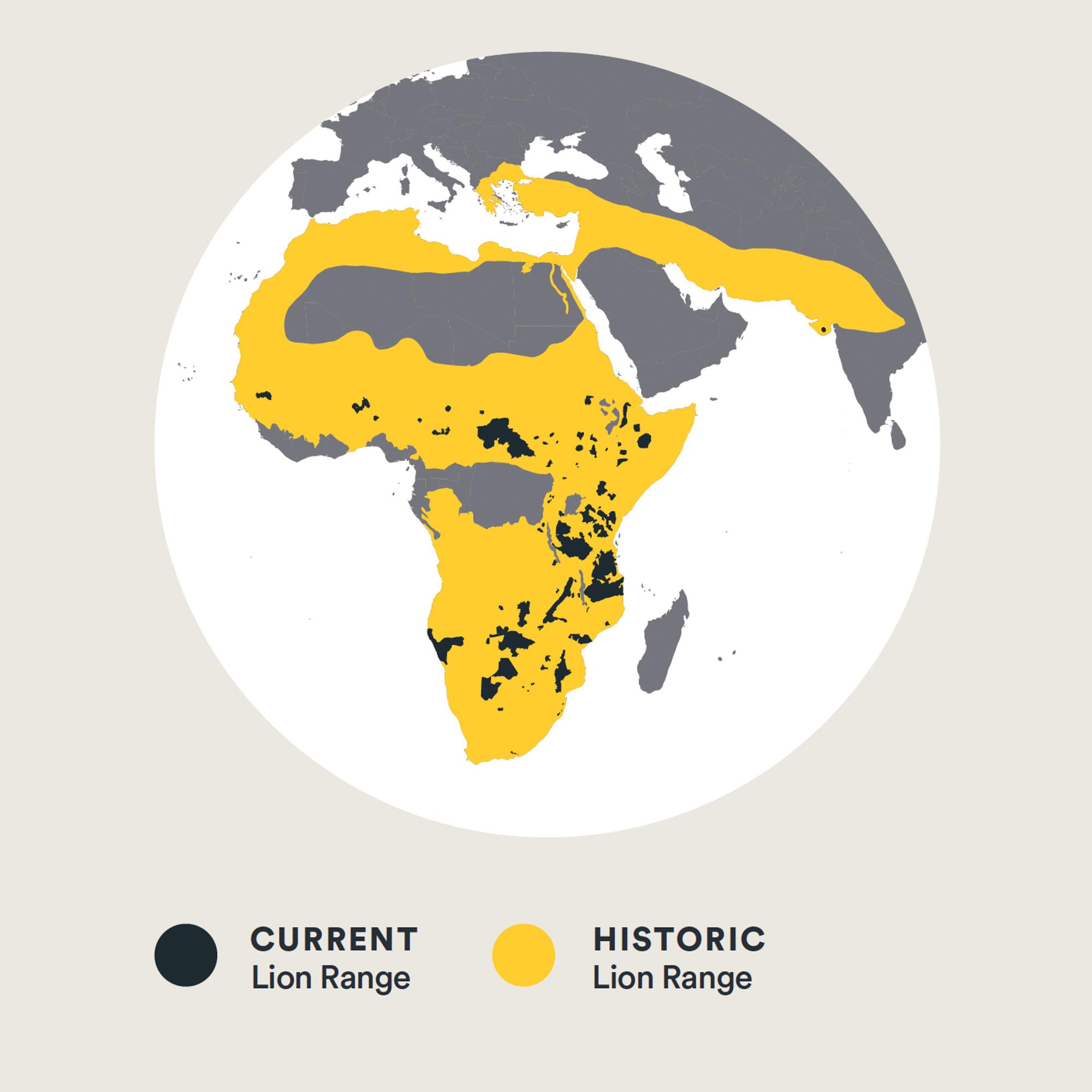 Panthera Lion Range Map